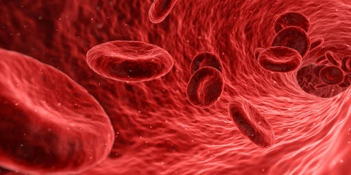 BLOOD IS THE FOUNDATION TO OUR HUMAN BODY