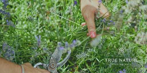 Top 5 Essential Oils for Your Medicine Cabinet from the Peace Garden!
