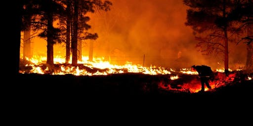 Latino Conservation Week: Smokey Bear and Fire in the Forest