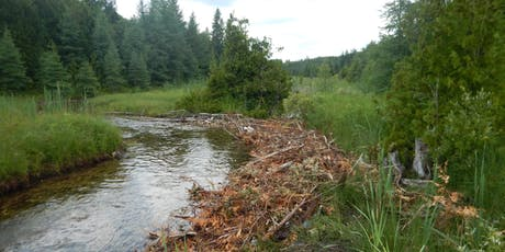 Armstrong Creek Stream Rehabilitation Workday Round 2! tickets