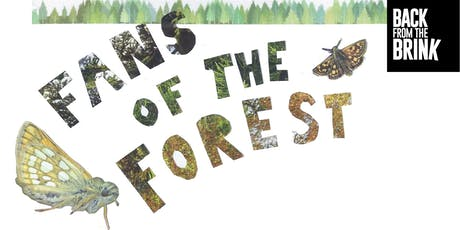 Fans of the Forest: guided walk and zine making at Fineshade Wood tickets