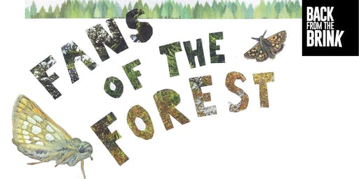 Fans of the Forest: guided walk and zine making at Fineshade Wood