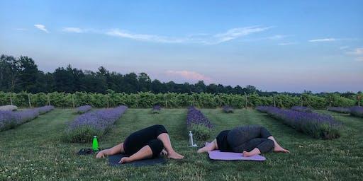 Lavender Harvest & Yoga
