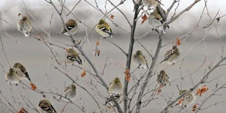 120th Annual Audubon Christmas Bird Count tickets