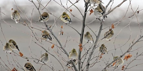 120th Annual Audubon Christmas Bird Count tickets