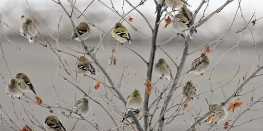120th Annual Audubon Christmas Bird Count