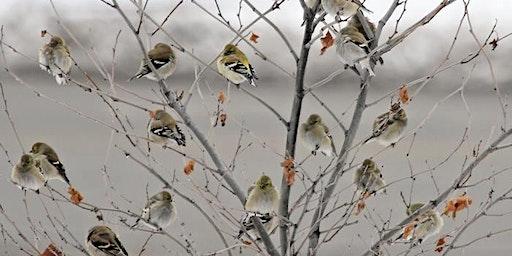 120th Annual Audubon Christmas Bird Count