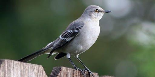 Homeschool Program - Bird Calls