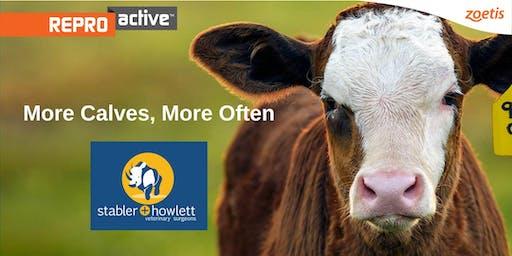 ReproActive Nebo - More Calves, More Often