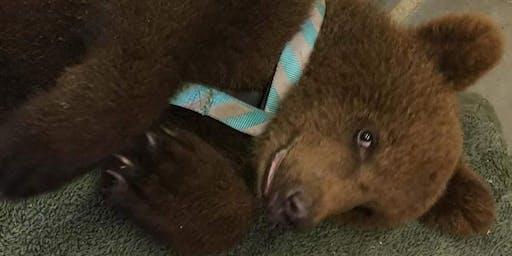 Bear Cub Habitat Experience