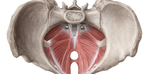 Pelvic Floor Dysfunction: A Clinician's Guide to Intervention PART 2