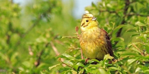 Walk with the Birds of the South Downs