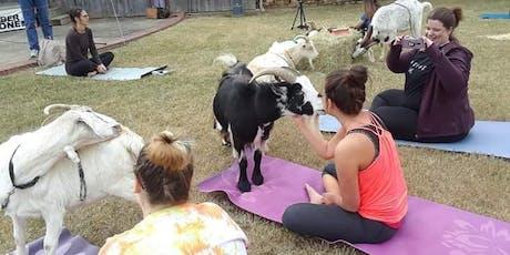 Goat Yoga in Wilson Park tickets