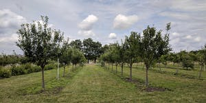 Downsview Park Orchard Party 2019