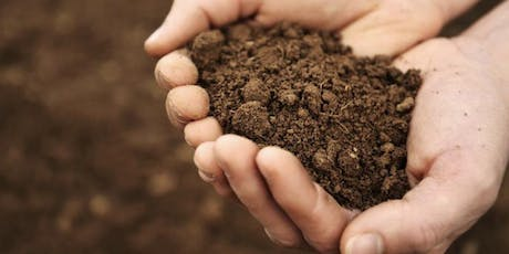 Soil: increasing fertility and building the carbon sink tickets
