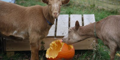 NamastHay Goat Yoga of Pittsburgh™ to Benefit Paws Across Pittsburgh