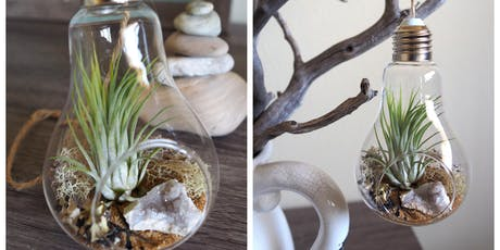 DIY Air Plant Geode Terrarium! tickets
