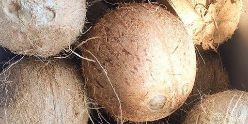Fresh Coconut Tasting