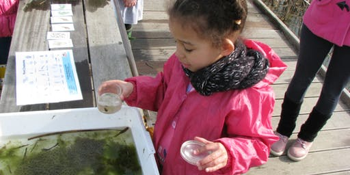 RSPB Toddler Fabulous Fish