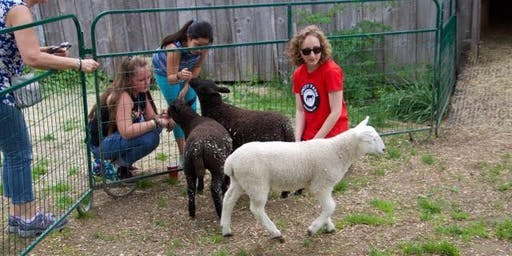 Kid's Morning Event! Unity Farm Sanctuary (August 24th)(11am)