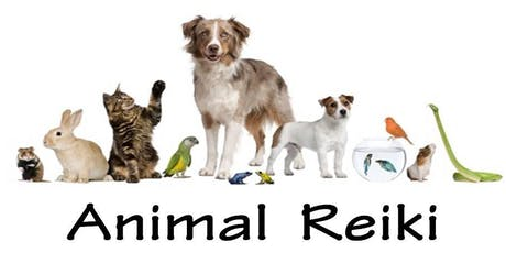 Animal Reiki Accredited Course - Level 2 tickets