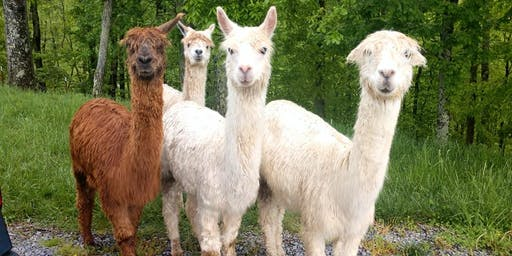 Tuesday, July 16th, 2019 Alpaca Farm Visit