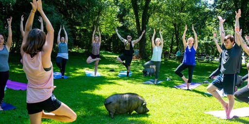 Yoga with Pigs with Liz August