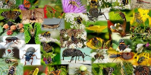 Family-Friendly Bug Bioblitz