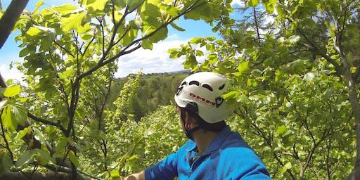 Roped Tree Climbing Taster Experience 7-AUG-2019