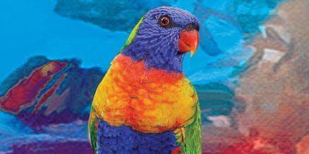 Colourful Lorikeet - Art Class