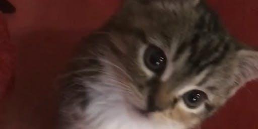 Kitten Yoga