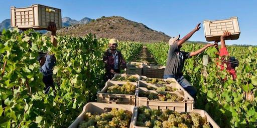 Wyn Smaak! A South African wine and food tasting Braai