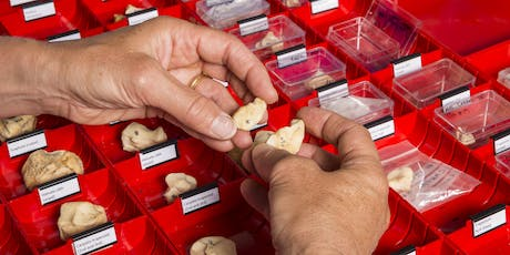 Tour of Historic England's Archaeological Science Laboratories tickets