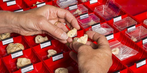 Tour of Historic England's Archaeological Science Laboratories