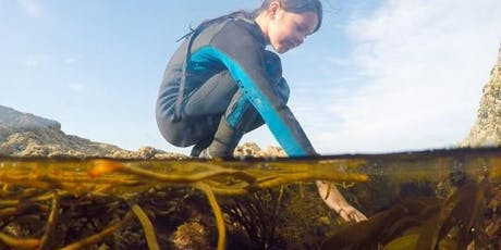 Family Rock Pooling Marine biology adventure - Castle Beach, Falmouth tickets