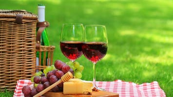 Wine Tasting and Food Pairing, With Wine Education
