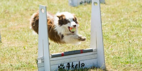 Flyball Class tickets