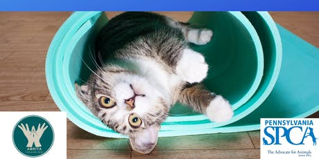 Kitten Yoga with Amrita Yoga South benefiting the PSPCA tickets