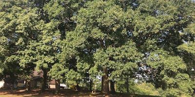 Professional Tree Care & Health Workshop