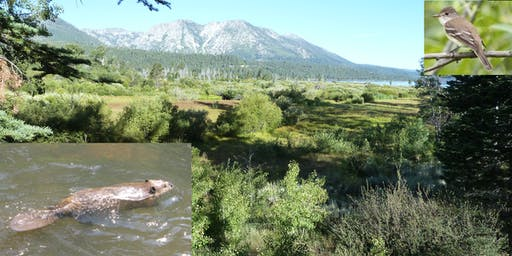 Beaver Restoration and WIFL Recovery in the Tahoe and Truckee Watersheds