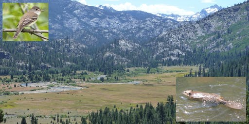 Beaver Restoration and WIFL Recovery in the Carson and Walker Watersheds