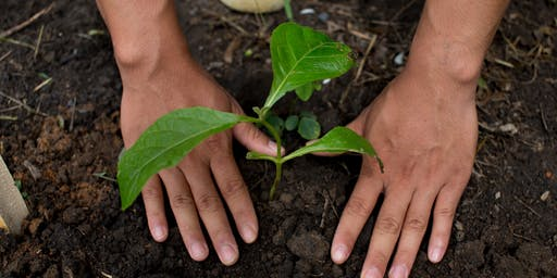 Tree Love & Care Workshop