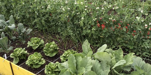 Gardening & Composting Class - August 2019
