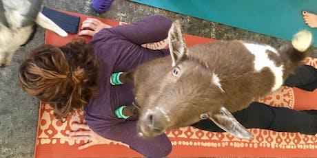 Eastside Goat Yoga tickets