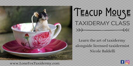 Teacup Mouse Taxidermy Class