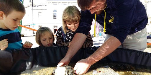 Falmouth Summer Marine Discovery Projecy Launch Event