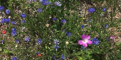 Herbal walk & workshop in Linear Park tickets