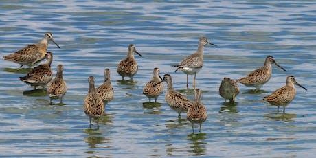 NYC Wild! Shorebird Season: Queens: Jamaica Bay Wildlife Refuge Walk tickets