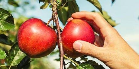 Autocueillette de pommes billets
