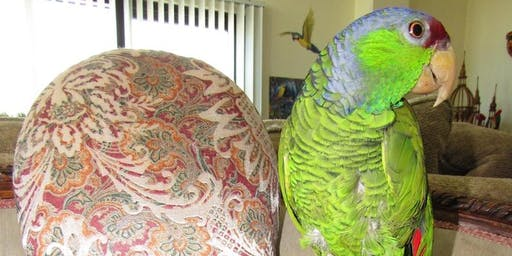 Squawk & Play: Parrot Poetry Party